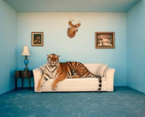 When I grow up I'm going to be a tiger and have a blue living room and nobody will be able to stop me because I'll be a MOTHER FUCKING TIGER via lemonlove