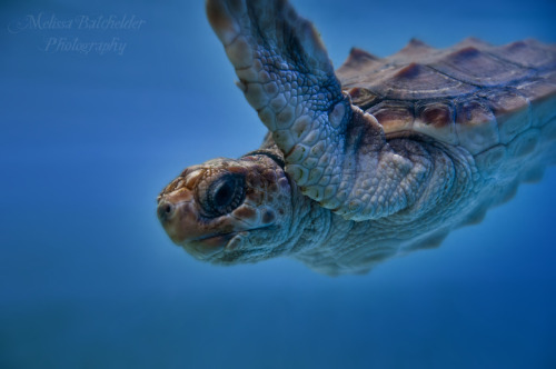 Work from Mystic Aquarium-Melissa Batchelder  taken with nikonD300s