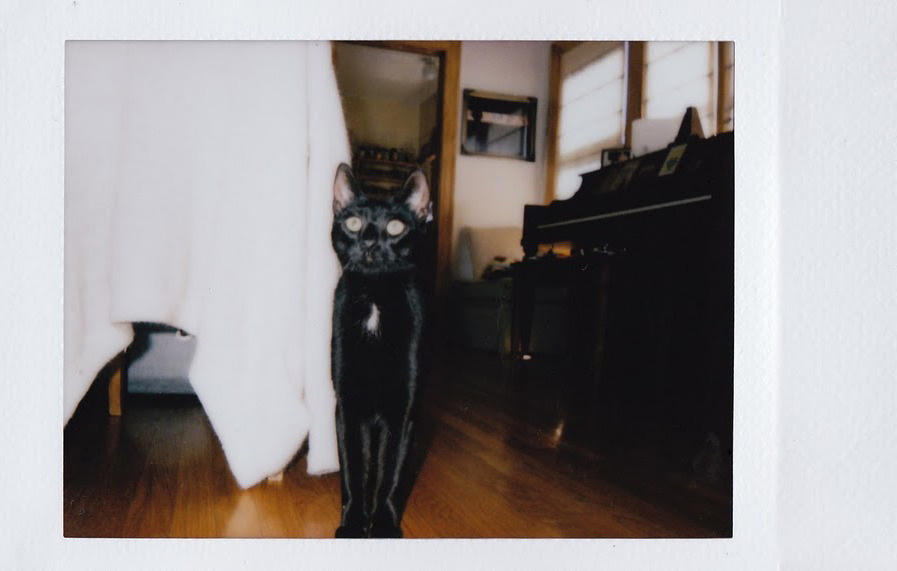 Shannyn Sossomans' Cat, by Cara Stricker