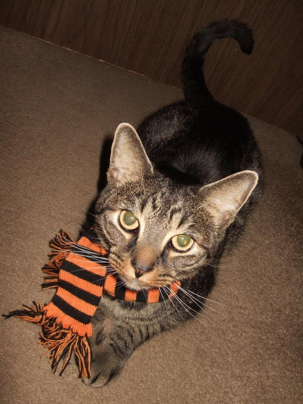 candyforyourskull:  Scarf fit for a kitty! My Kitty Tyson!http://candyforyourskull.deviantart.com/gallery/#/d4i6dyk