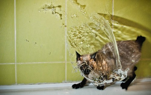 catasters:   I will not take a showerrrrrr!!!