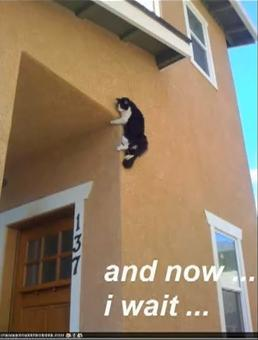feedmecats:  Howd that cat get there!?
