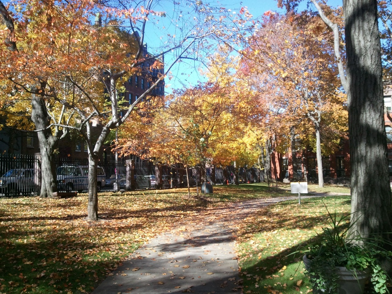 Fall at Pratt. Camera: Samsung Focus.