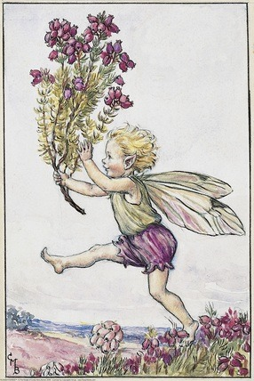 Heather Fairy from Flower Fairies of the Summer. A small boy fairy runs from left to right, holding a branch of heather in his right hand.