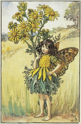 Ragwort Fairy from Flower Fairies of the Summer. A girl fairy stand with one hand on her hip, the other round a ragwort flower.