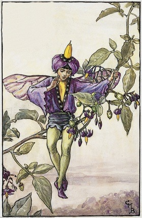 Nightshade Fairy from Flower Fairies of the Summer. A boy fairy sits on a nightshade frond with one arm raised in warning.