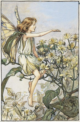 Traveller's Joy Fairy from Flower Fairies of the Summer. A girl fairy sits facing left on a branch of traveller's joy pointing with her right hand.
