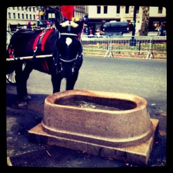 #drink #water #horse  (Taken with instagram)