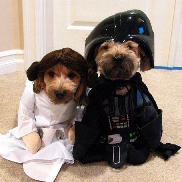I'm your wafther! #dog #starwars #leia #darthvader #force #friki #geek #freak #nerd #girona #spain #winter #nofilter #igers #igersgirona #igersspain #iphonesia #instagramhub #photooftheday #art #instagram #instamood #bestoftheday #picoftheday #igdaily #jj  (Taken with instagram)