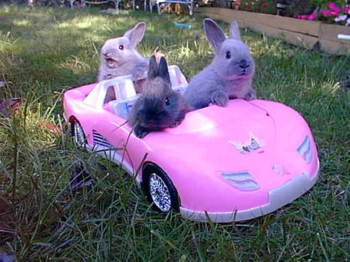 tyleroakley:  tolaughterandbeyond:   SLOW THE FUCK DOWN.     GET IN LOSER, WE'RE GOING HOPPING.