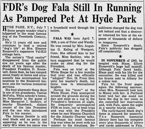FDR's Dog Fala Still In Running As Pampered Pet At Hyde Park (Toledo Blade, July 8, 1951)