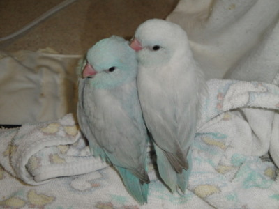 smashed-diamonds:  lovebirds