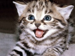 hellyeahkitties:  Welcome to this here kitten blog!