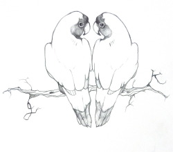 Lovebirds, wedding invitation brainstorm Pencil on sketchbook
