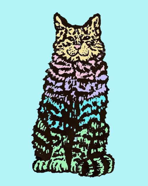 crazy cat by me, hoddleypoddley