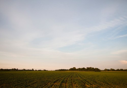 """Highway 61 through the Delta is all about blues, corn, and soybeans."" by Caffe Vita"
