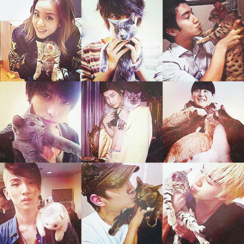 ◆ K-pop idols with cats ◆