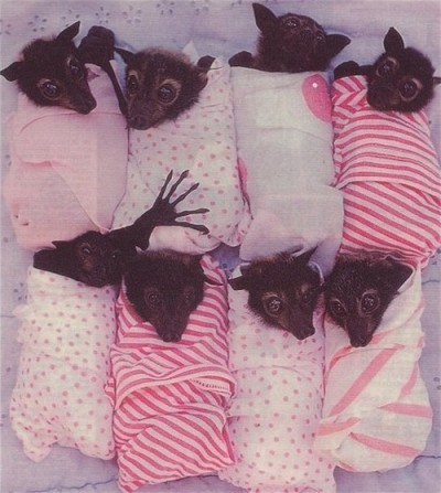 Ok. I can feel good about going to bed now. I've seen swaddled bats.