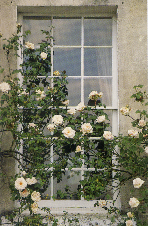 thisivyhouse:  A window in Bath
