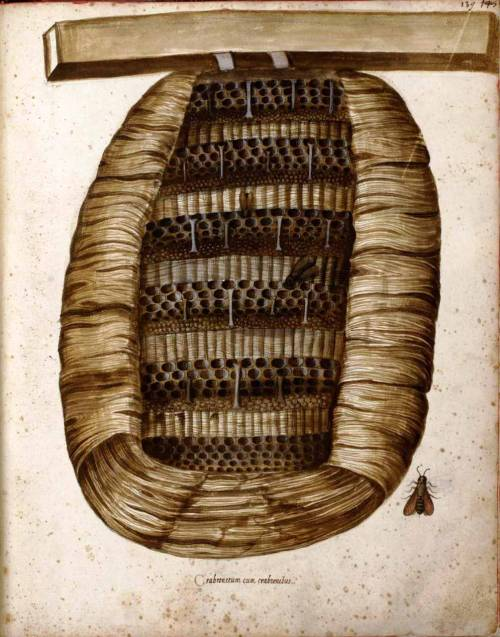 mythologyofblue:   Wicker bee hive. (Medieval Italian.)   (wallacegardens)