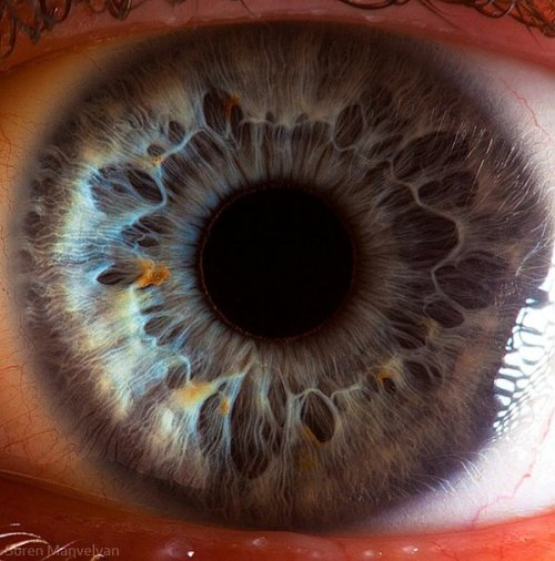 Extremely crisp close-up of a human eye.
