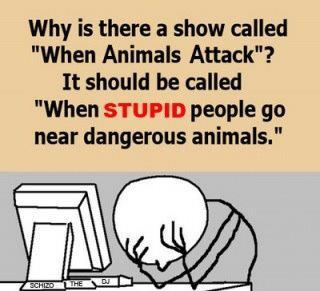 Why is there a show called When Animals Attack? It should be called When Stupid People Go Near Dangerous Animals