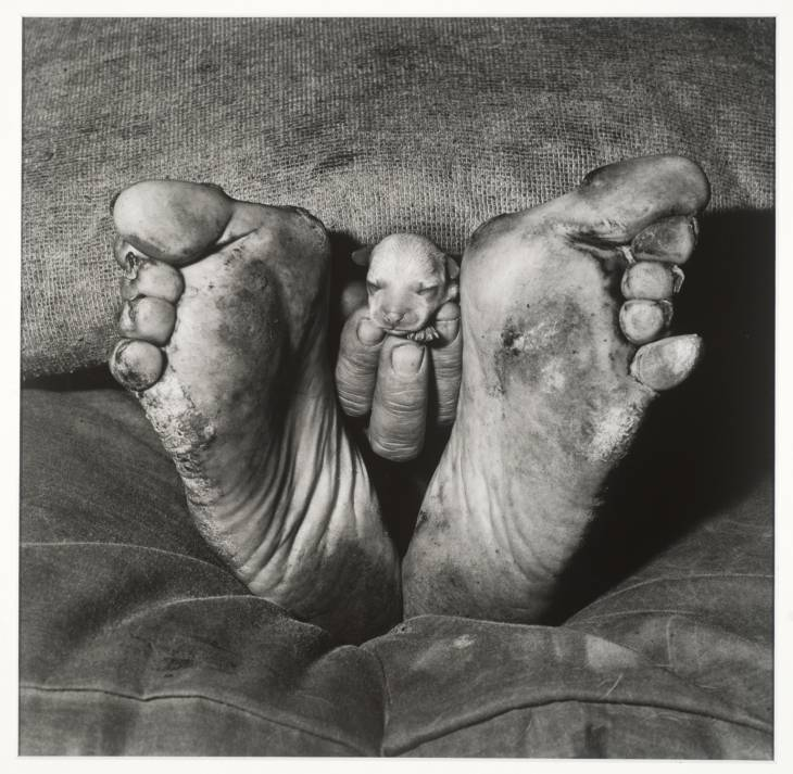 heavy-water:  Roger Ballen - Puppy between Feet  1999