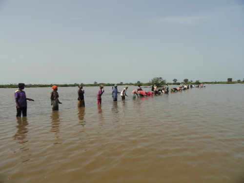 Mangrove Reforestation  TRY women line up, knee-deep in warm, muddy water, to plant mangrove seedlings in the community of Kamalloh, not far from the TRY Centre. TRY women planted approximately 1,000 mangroves on this day, ensuring a better future for their families as well as The Gambia as a whole.