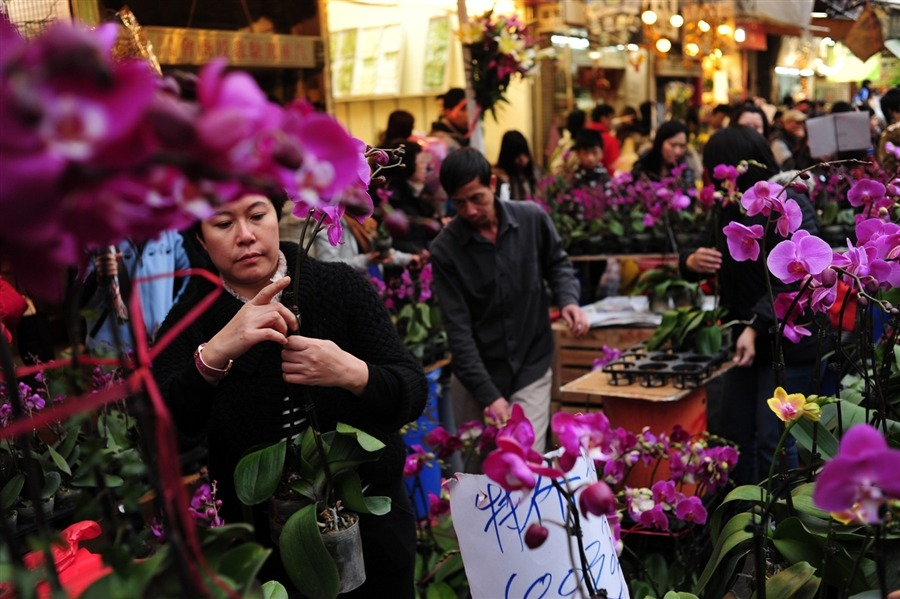 fotojournalismus:  People buy flowers at the Flower Market to decorate their homes on the eve of the Lunar New Year of the Dragon in Hong Kong on Jan. 22. The Chinese New Year is the most important of the traditional Chinese holidays. Flowers are said to give good luck and are given when visiting family for the traditional New Years Eve feast. [Credit : Pedro Ugarte / AFP / Getty Images]