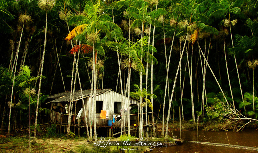 jangala:  Life at the Amazon 2 by `isacg