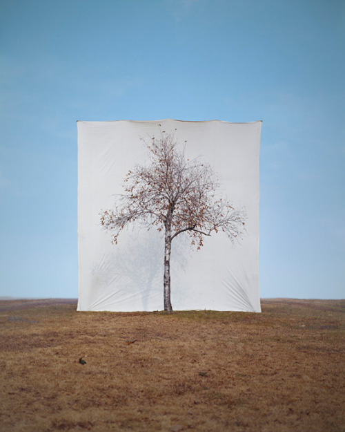 Myoung Ho Lee Tree #1, 2006  From the series Tree  Archival Inkjet Print  50″ × 40″