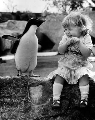 A little girl and a penguin. What a delightful reaction.