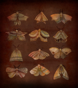 sweetpeapath:  wings…but cloaks and capes and…?   LEPIDOPTERAMANIA [noun] an obsession with moths and/or butterflies.