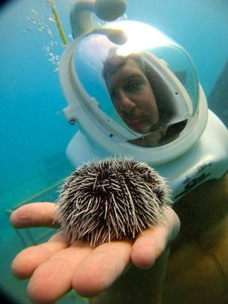 PIC OF THE DAY: Sea Urchin in Aruba