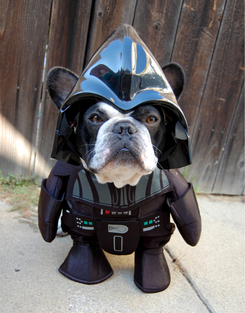 in-cohesive:  jasinner:  You underestimate the power of the bark side. I will poop on you!  this is amazing