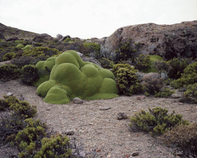 laughingsquid:  The Oldest Living Things in the World by Rachel Sussman