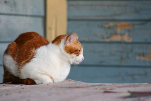 porch kittah by trishamonster on Flickr.