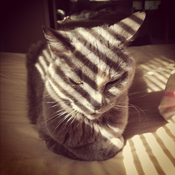 Striped   (Taken with instagram)