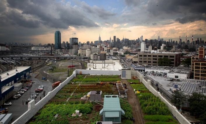 World's Largest Rooftop Farm Expands its Territory At 40,000 square feet, the Brooklyn Grange rooftop farm in Long Island City is the largest of its kind. Anywhere. But the folks behind its growing success have decided that such an enormous space still doesn't stand up under their ambitions. To hold onto their title, the Grange has recently decided to expand to a rooftop in the Brooklyn Navy Yard, adding more than 45,000 square feet to their current holdings. That's a heap of vegetables if ever a heap there were.
