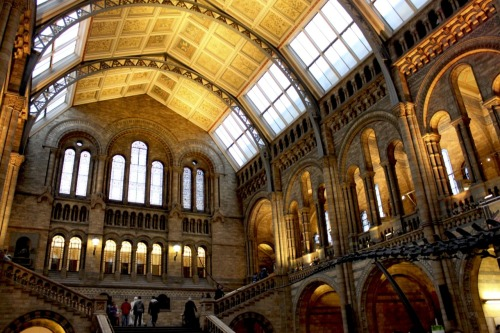 lavenderdays:  The Natural History Museum in London, England.  This is one of my favorite museums in London simply based on the gorgeous architecture.  The staircases are my favorite part of the building.   Taken December 2011