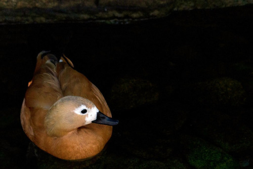 Duck in a Cave on Flickr.