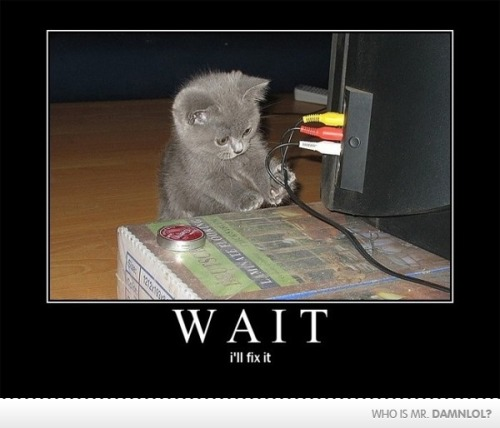 the awkward moment when your cat can fix a tv but you can't. :P