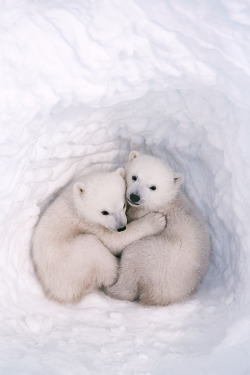 I have kinda a thing about polar bears. That they are my favorite ever, to be specific.