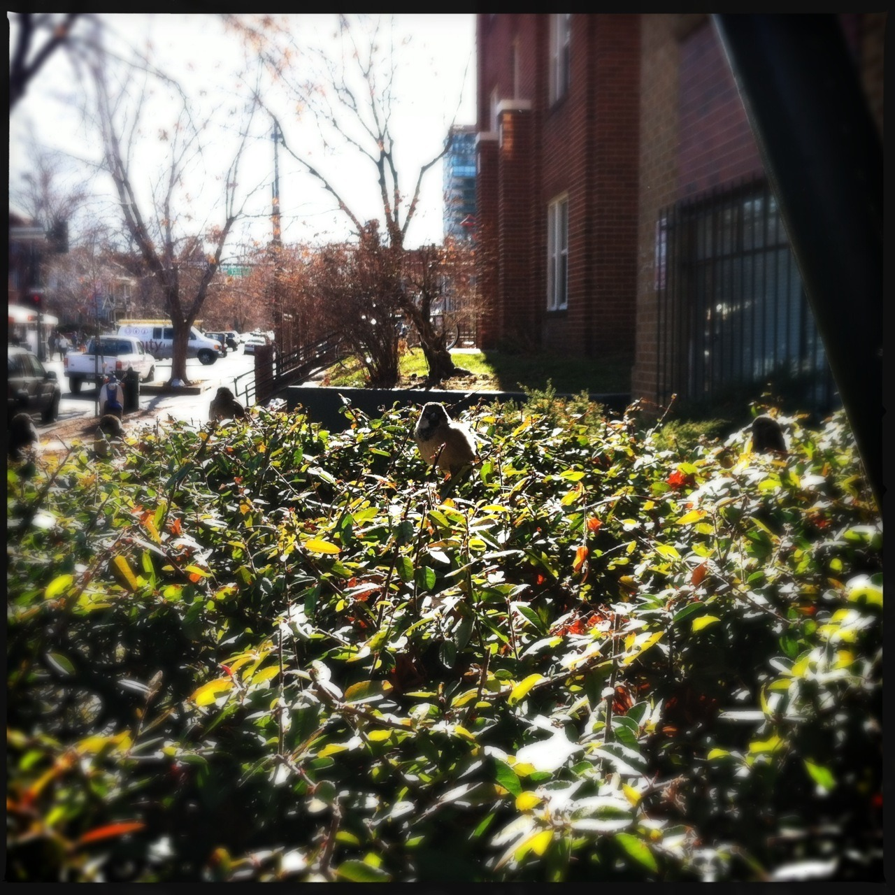 Birds in the Bush Taken with Hipstamatic, Loftus Lens, DC Film, No Flash.