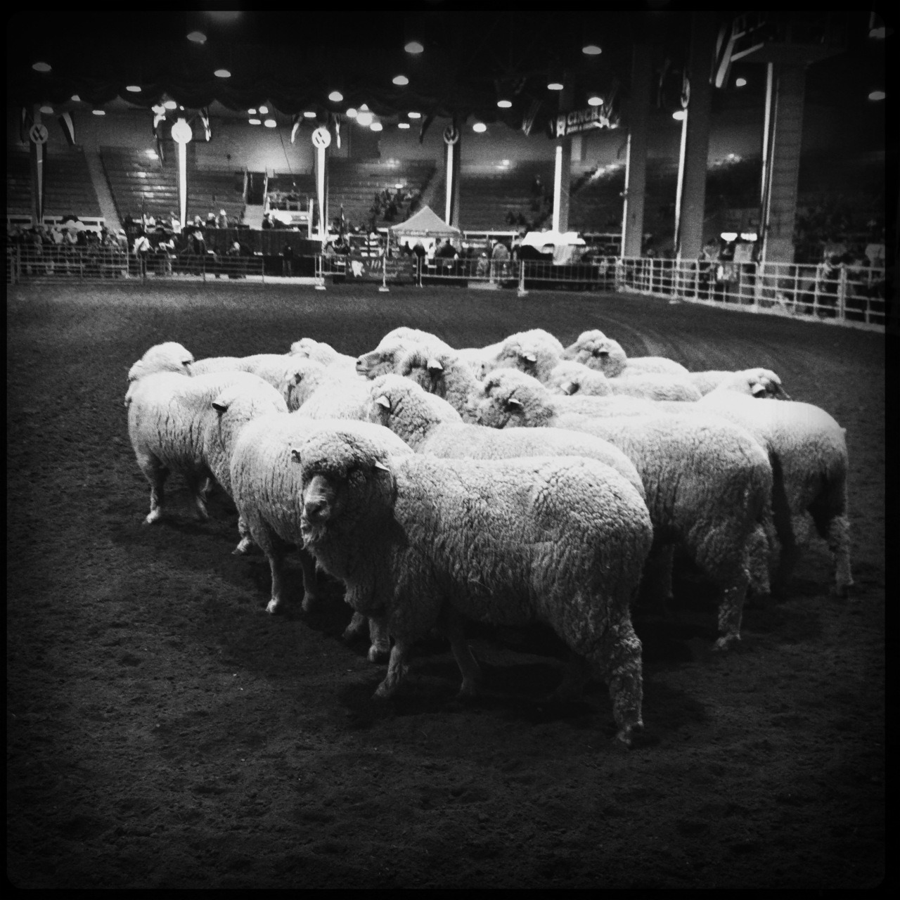 Sheep II Taken with Hipstamatic, Tejas Lens, Rock BW-11 Film, No Flash.