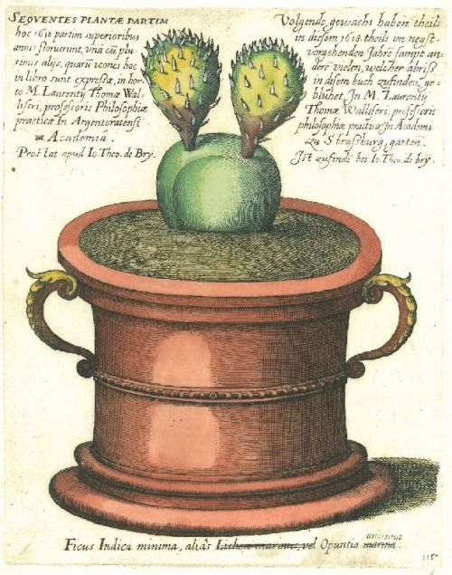scientificillustration:  wallacegardens:  Cactus Pot (1641), copper plate engraving, Matthew Merian.  Matthew Merian (Matthäus Merian) was the father of the great naturalist and scientific illustrator of insects Maria Sibylla Merian  I am so excited to see this on my dash. I've recently been reading up on Maria Merian and her adventures in the New World documenting all the new types of plants and insects she found. What a life she had!