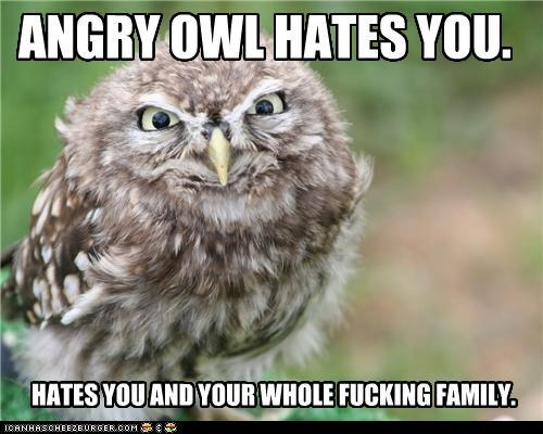 jenkupo:  Today's fantastic owl picture of the day is going to me this angry owl because I'm having a shitty day.