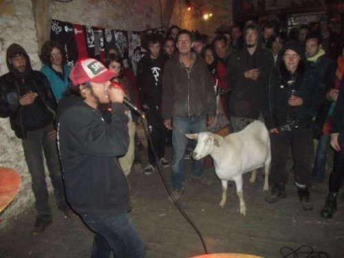 Goat Attends Heavy Metal Concert The band was going to sacrifice him as part of the show, but he was the only one that bought merch. Even if it was just to eat.