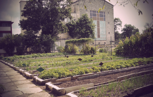 knowurbanis:  URBAN FARMING // CUBA