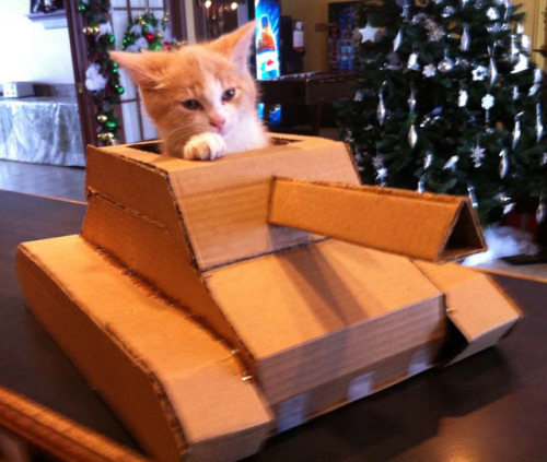 laughingsquid:  Cardboard Kitten Tank